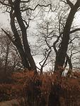 2013-11-17 14.32.41.jpg