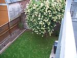 yard after 2.jpg