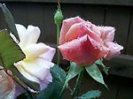 06/23/2011