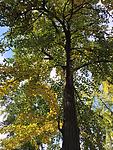2015-10-29 10.32.33 HDR.jpg