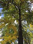 2015-10-29 10.32.33.jpg