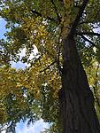 2015-10-29 10.32.46 HDR.jpg