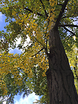 2015-10-29 10.32.46.jpg
