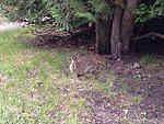 2013-05-31 09.38.25.jpg