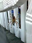 droid-macro-spider.jpg