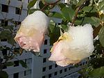 2009-12-06 09.12.02.jpg