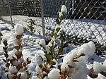 2009-12-06 09.53.14.jpg